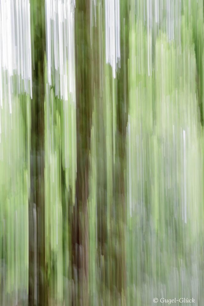 Bäume verwischt Ss